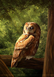 The Old Owl by Bandarai