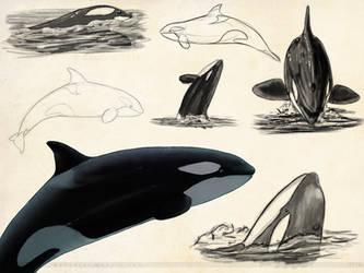 Orca Sketchpage by Bandarai