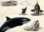 Orca Sketch Page