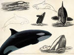 Orca Sketchpage