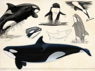 Orca Sketchpage 02 by Bandarai