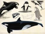 Orca Sketch Page 02