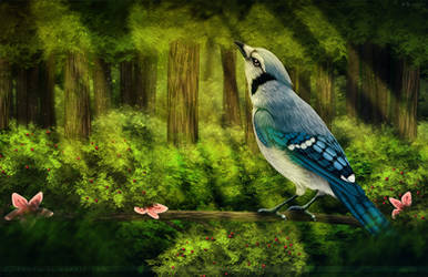 Life In The Canopy by Bandarai