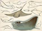 Cownose Stingray Sketch Page