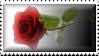 Rose Stamp by Sallinillas