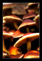 HDR mushrooms by gulbagge