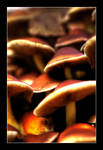 HDR mushrooms