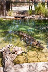 Crocodile - 2 by Stianbl