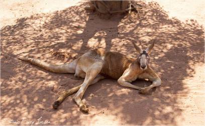 kangaroo - 2 by Stianbl