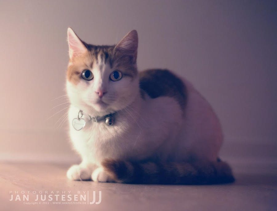 Kirsten the Cat by I-Got-Shot