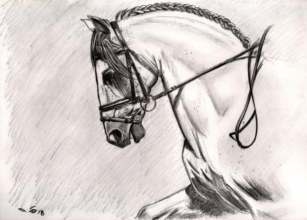 Andalousian horse by emalterre