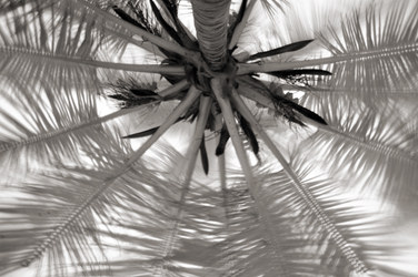 Looking up at a palm. by Krakentastic