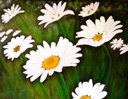 Field of Daisies by aki-mikadzuki
