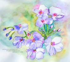 Blue Sakura by aki-mikadzuki