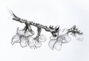 Sakura by aki-mikadzuki