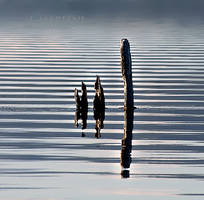 Symmetry... by kyrneucciu