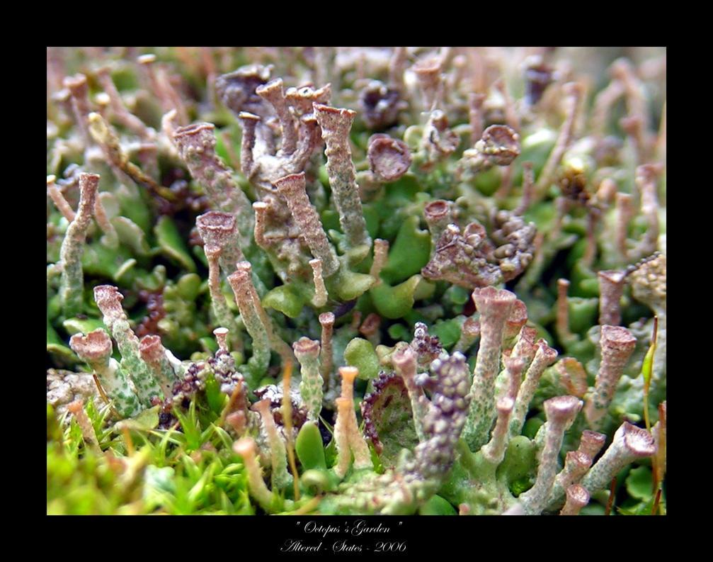 Octopus 39 S Garden By Altered States On Deviantart