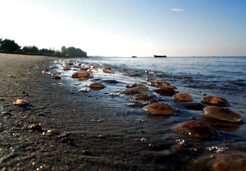 .:BALTIC SEA:. 4