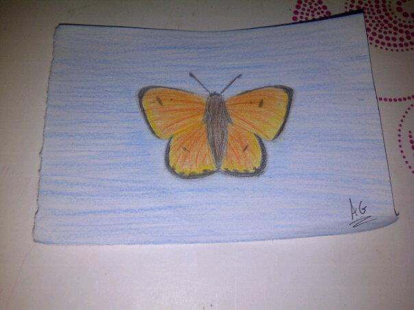 Butterfly by 9-AmBeR-6