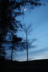 Twilight Over the Swamp-II