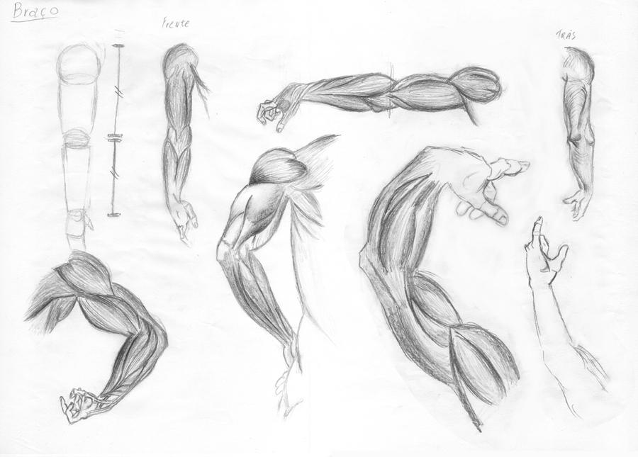 Perfect Male Anatomy Sketches Crest - Human Anatomy Images ...