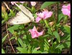 Flutterby, Butterfly _ Vier