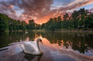 Swan lake sunset by ibasimaikataimeto