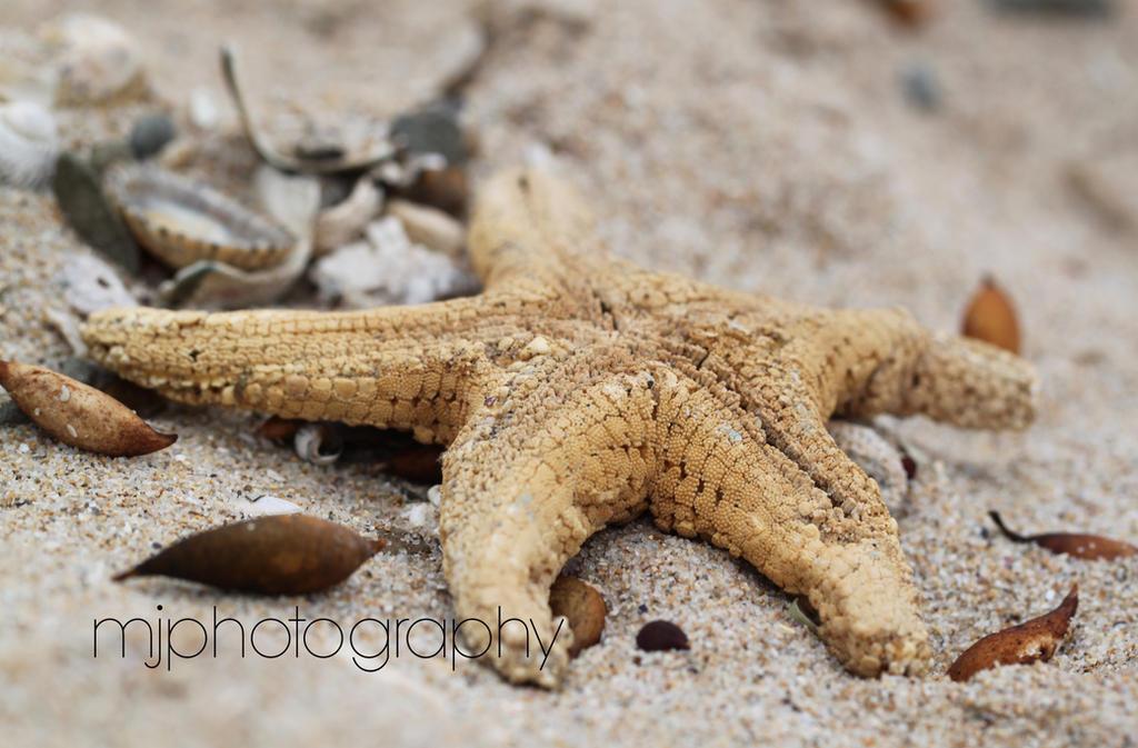 Beach Macro by Digimaree