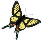quick butterfly by Trutze