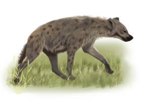 Hyena 2011008 by Trutze