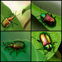 beetles united 1 by Trutze