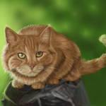 2011053 cat again