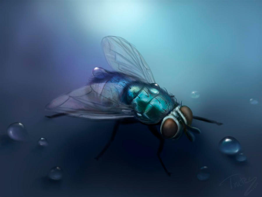 the blue fly by Trutze