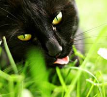 Meow by GrisLeyla