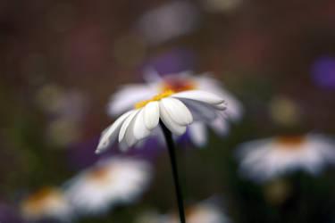Daisy by g30dud3