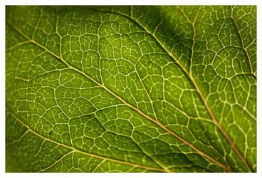 Leaf by g30dud3