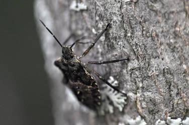 Bug on Bark by Afriel303