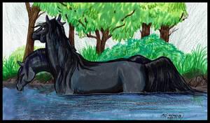 Kelpies Horse Black Equine Pony Equus Monster Blue