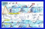Dolphin Training and Husbandry Exotic Wildlife by StephanieSmall