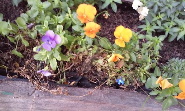 Flowers by pegacorna2