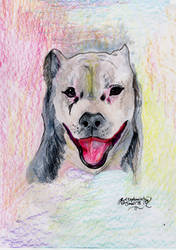 Sissy Dog hound canine pitt bull staffordshire Ter by StephanieSmall