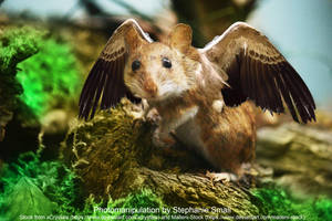 flutterfuzz winged mouse rat rodent by StephanieSmall