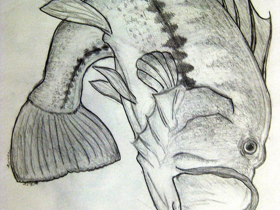 bass fishing drawings