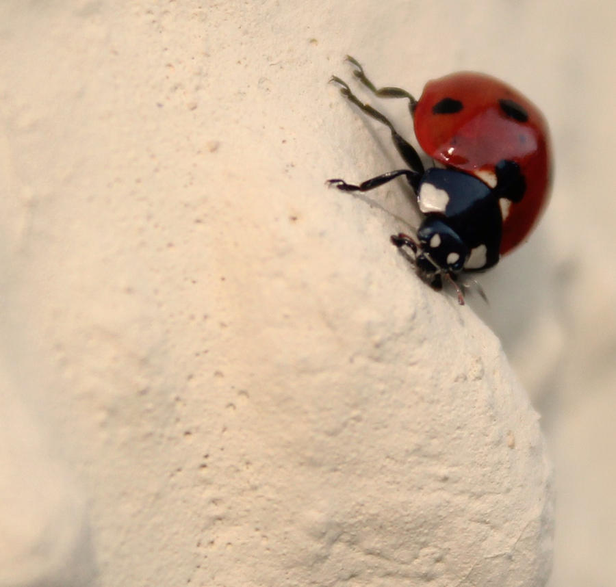 Ladybug by Silvermoonswan