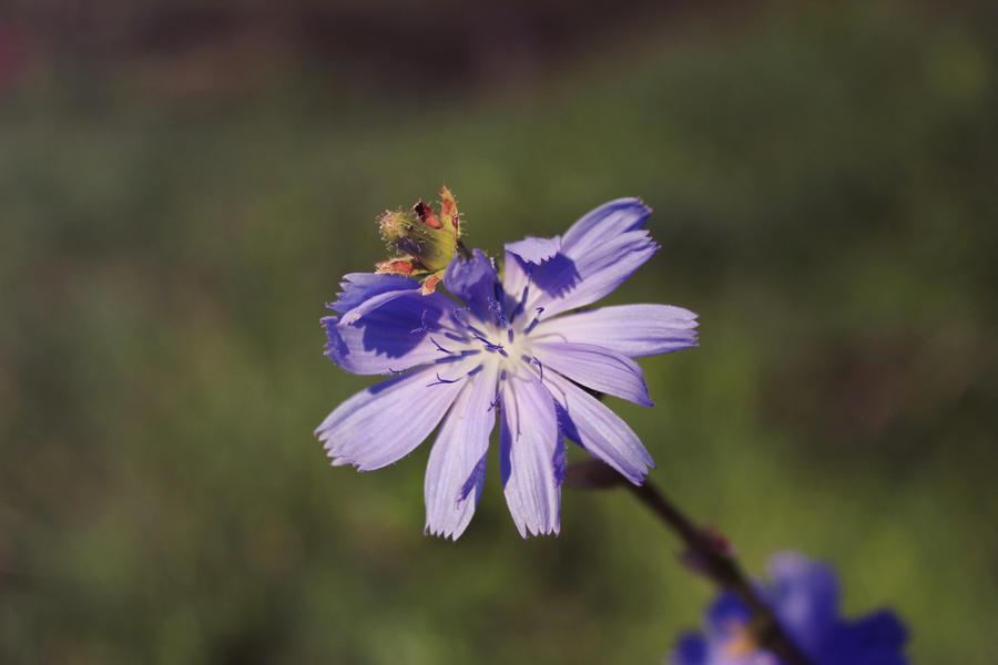 Fleur by Silvermoonswan