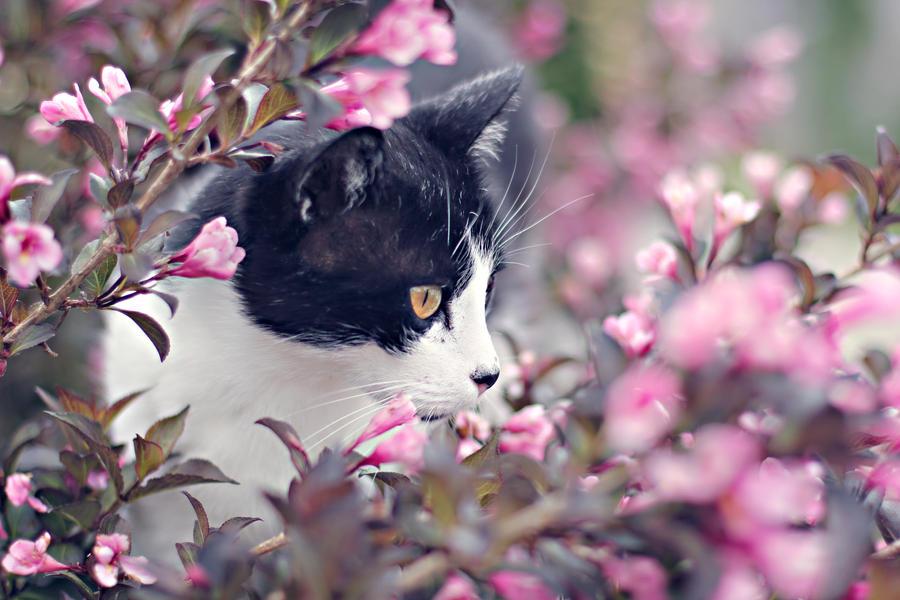 Présentations de Déchéance Nocturne Flowerland_by_silvermoonswan-d6jibcr