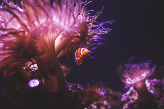 Nemo`s Home