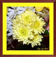 Birthday Flowers 07-17-2017 1092abab by SirIvyPink