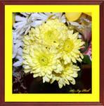 Birthday Flowers 07-17-2017 1092abab