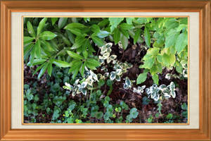 Plant White With Green 1255 (2) by SirIvyPink